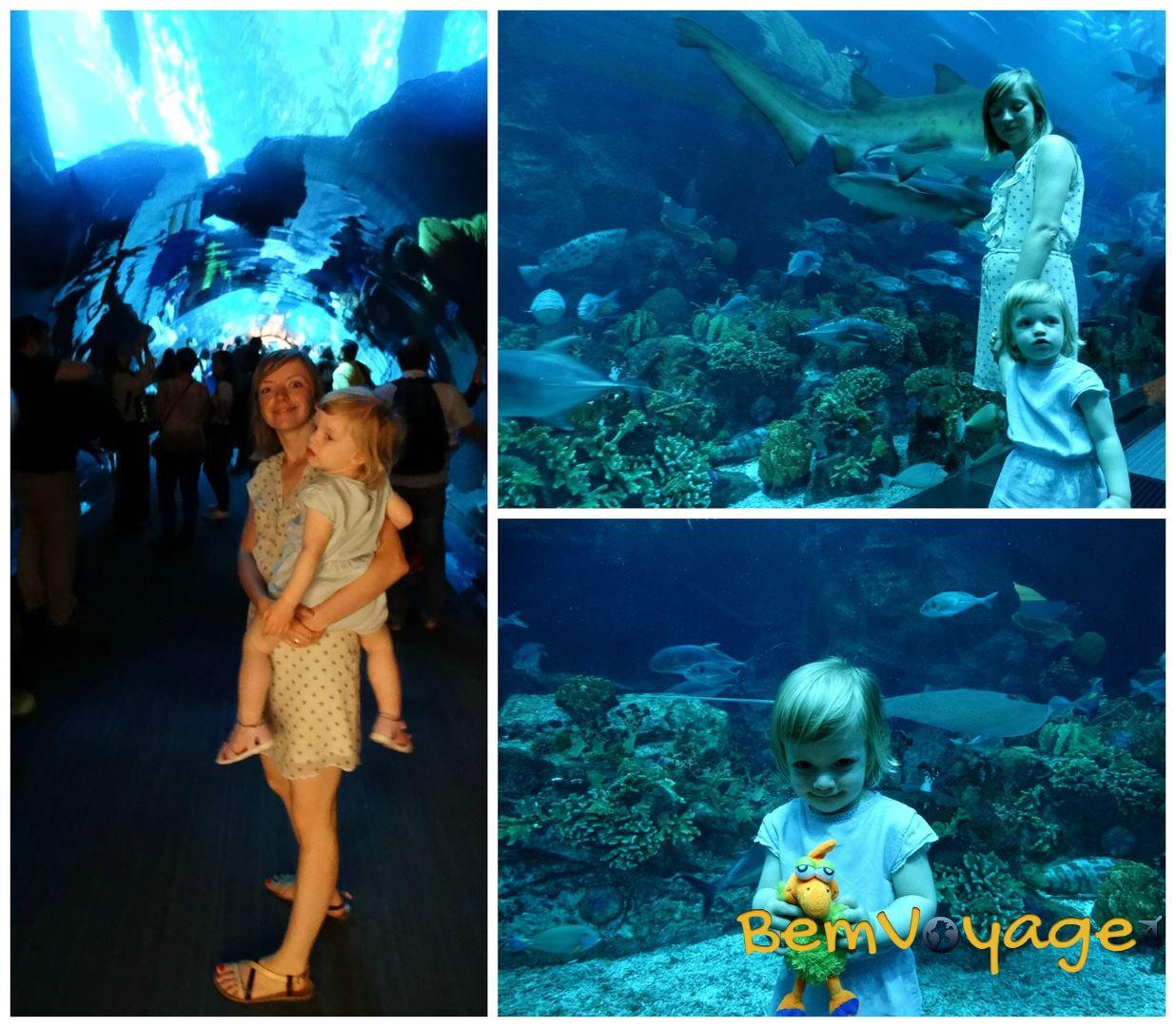 dubai aquarium2 logo