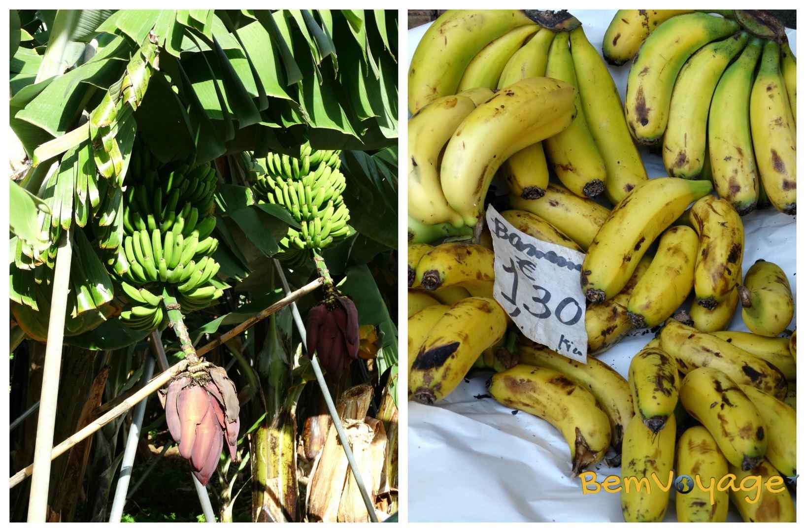 banany logo